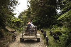 Tongariro - Woofing