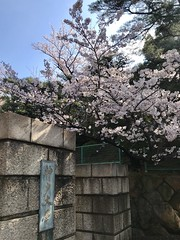 190411_Spring_1