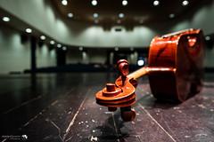 Il violoncello.