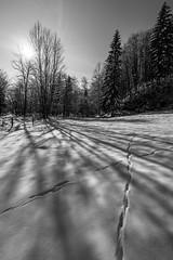 Trails on snow