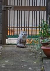 My stray cat, Silver 22-Mar