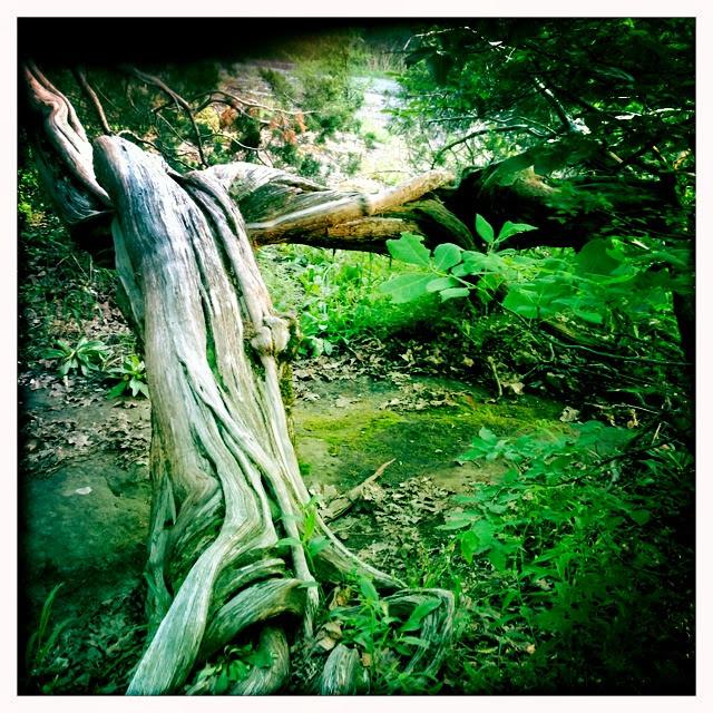 Twisted tree II