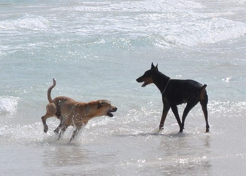 Tulum - Beach 26 - Beach dogs-1