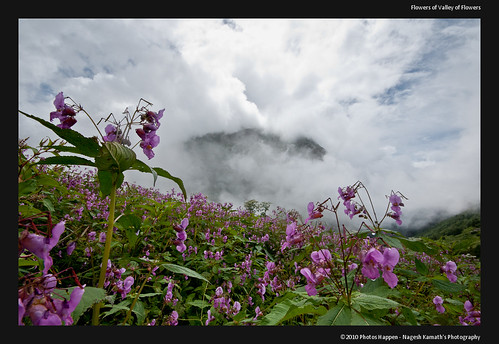 Flowers of Valley of Flowers