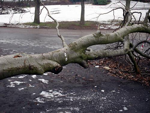 David Shrigley, Fallen Tree, 1996