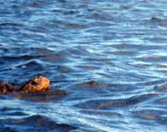 Sea Turtle Head