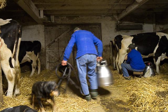 Rodger's milk