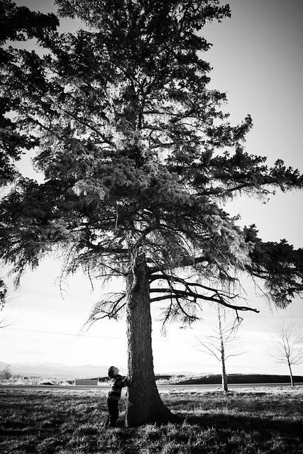 Woah! Big Tree!
