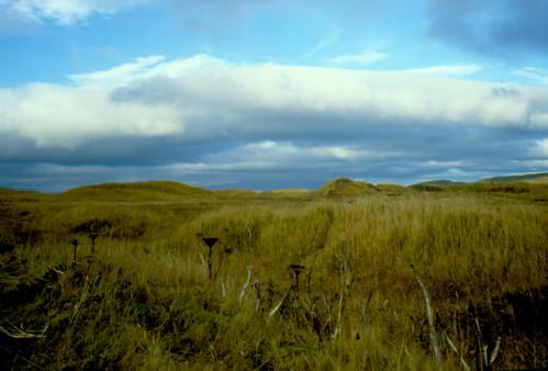 Adak Tundra