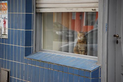Kiez Katze by runnie1