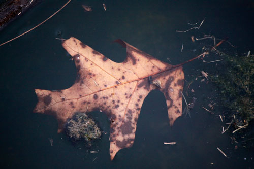 floating leaf in dark water