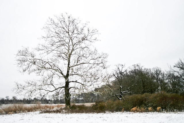 IMG_7691Big tree