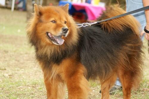 Dog walking, Dog Walk for Cancer
