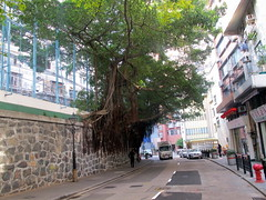 Banyan Tree Retaining Wall