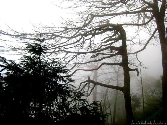 Foggy Trees at Emei Shan