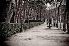 Madrid - Janvier 2012 - Parc du Retiro
