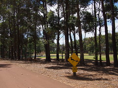 Ducks Crossing Sign, Margaret River