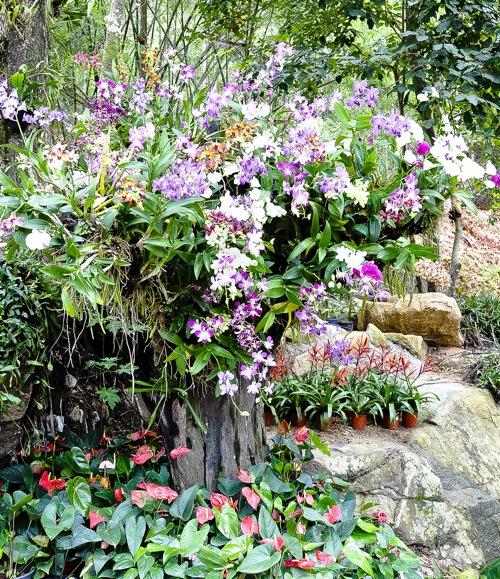 Magic Garden - Thailand, Koh Samui (9 of 42)