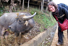 Emily and the Water Buffalo
