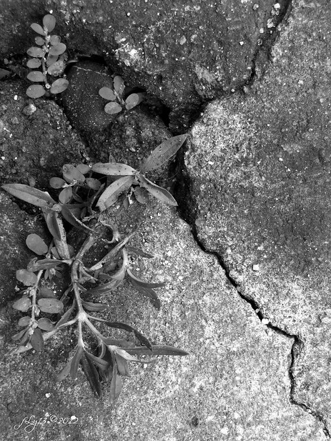 cement crack wild plants