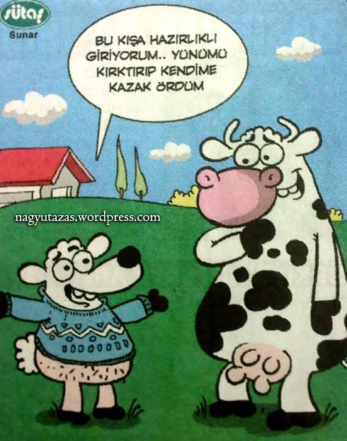 Török vicc: Egy tehén és egy bárány beszélget