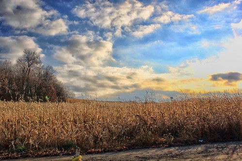 Pennsylvania Corn Field
