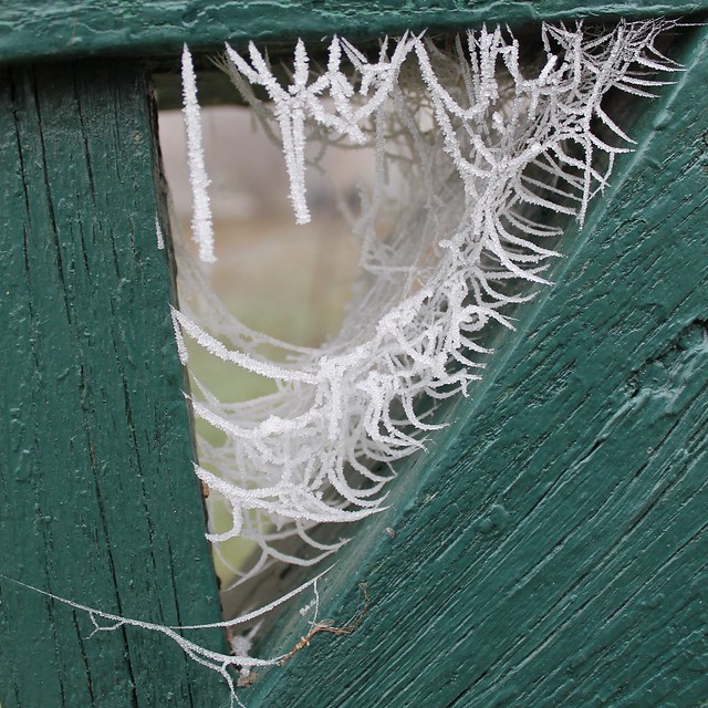 Frozen spiderwebs