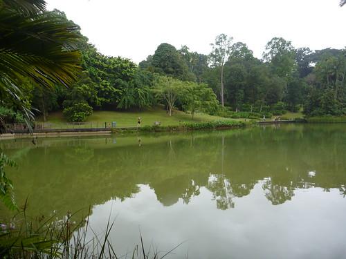 Lol parkrunning in Singapore Botanical Gardens