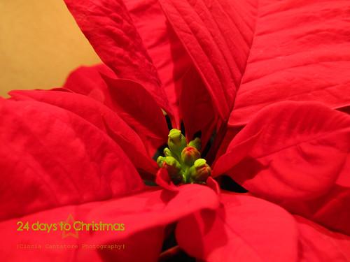 Fate un regalo... Alla ricerca!!! 10/24 by [Piccola_iena]