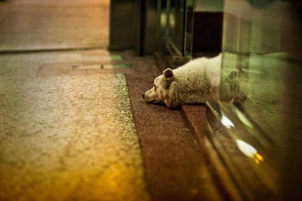 Dog Resting in Taichung Doorway
