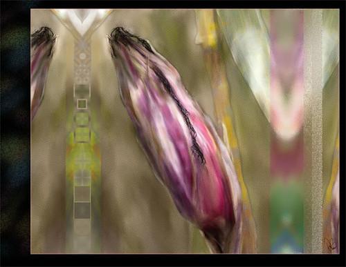 Corn Husk by drobi_123