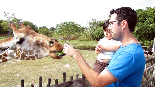 Feeding Giraffes by alexthoth