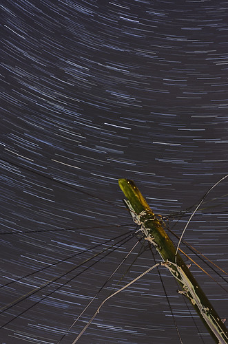 Telegraph Star Trails