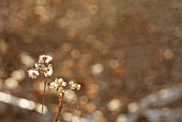 Seeking beauty and light