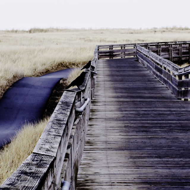 two crows sitting on the boardwalk