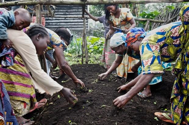 Alissa Everett Congo Planting.jpeg
