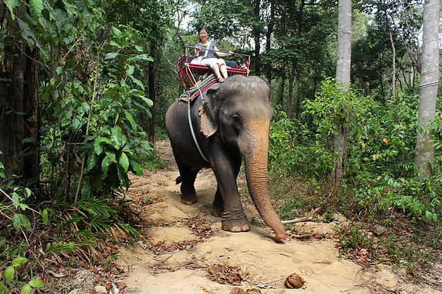 Elephan riding, Ko Chang, Thailand