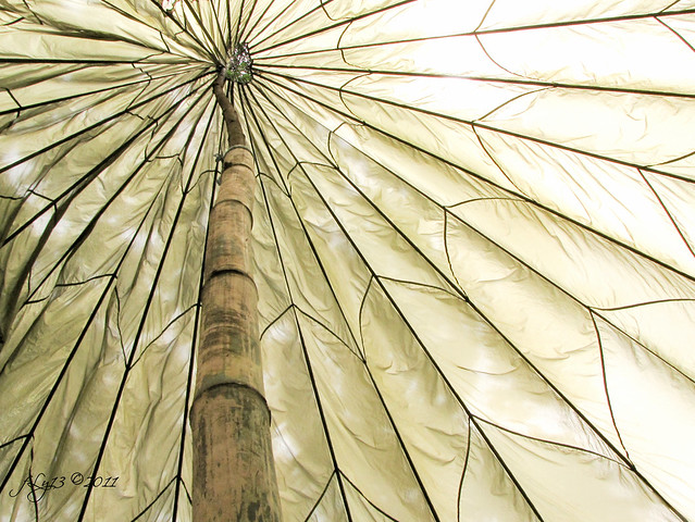 La Mesa Dam Eco Park tent pattern
