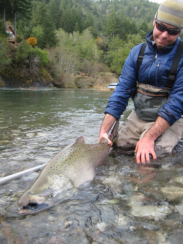 Oregon Fall Chinook