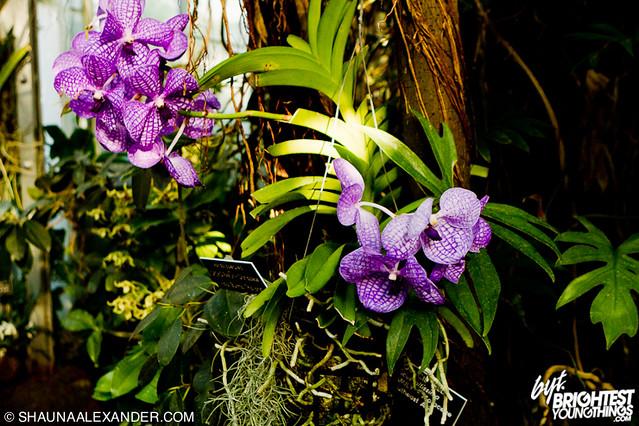 Bluebrain_BoomboxWalk_BotanicalGardens_14Jan2012-5947