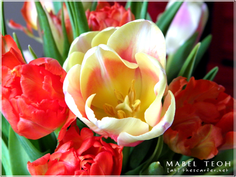 Tulips in the house!