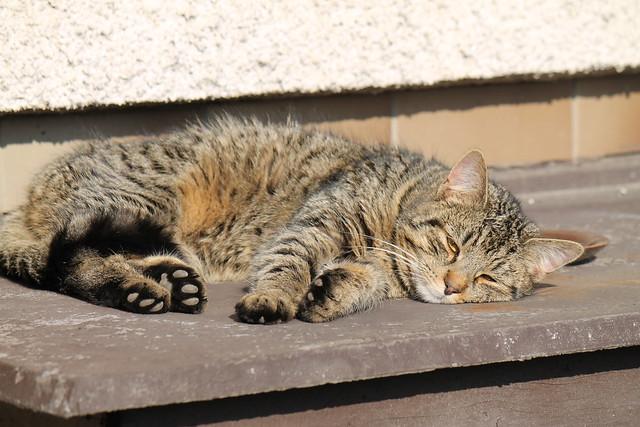 Mourek sunbathing