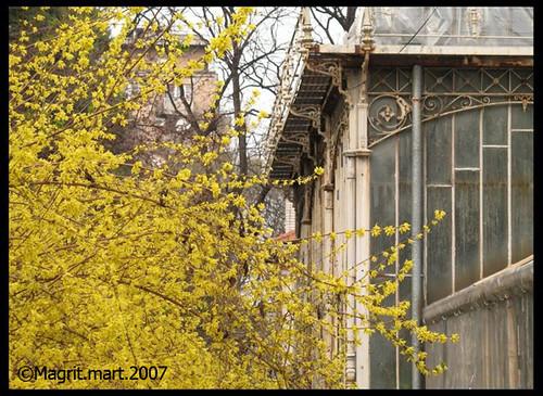 botanical garden 2007