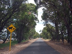 Cow Crossing Sign, Margaret River