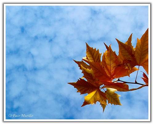 otoño_03