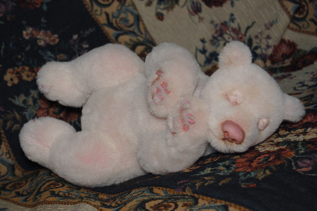 vero bears albino polar bear cub elvin