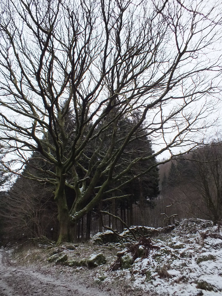Blaen Y Glyn photography walk