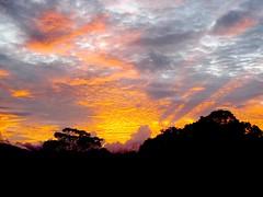 Sunseep at sunrise