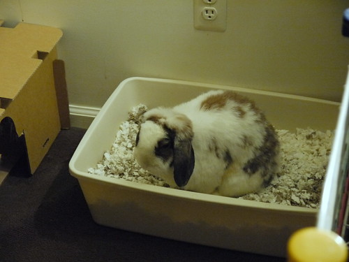 betsy in the litter box