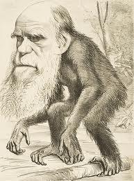 darwin-ape